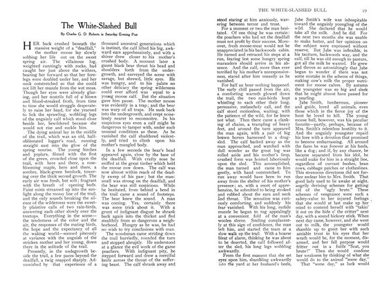 Article Preview: The White-Slashed Bull, December 1907 | Maclean's