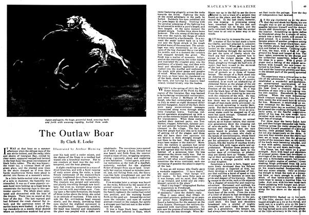 Article Preview: The Outlaw Boar, July 1917 | Maclean's