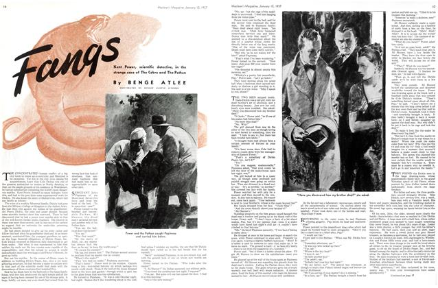 Article Preview: Fangs, January 1937 | Maclean's