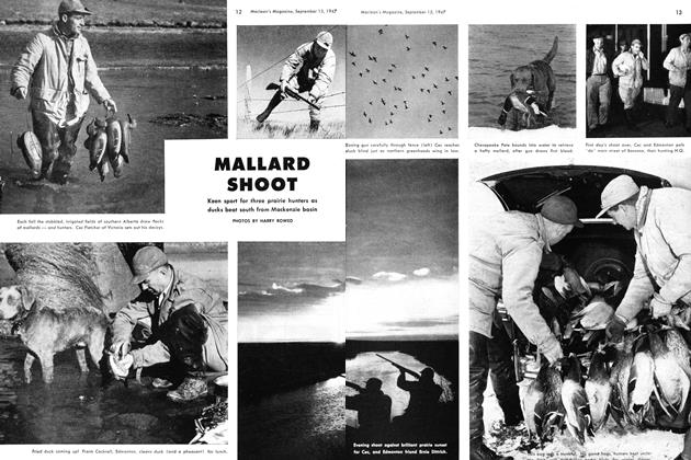 Article Preview: MALLARD SHOOT, September 1947 | Maclean's