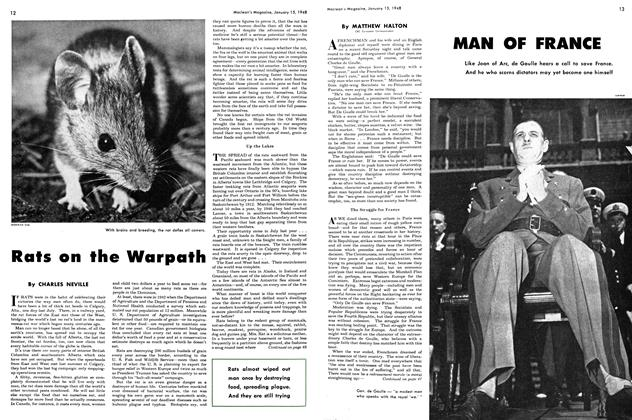Article Preview: Rats on the Warpath, January 1948 | Maclean's