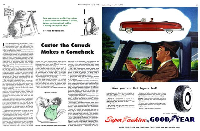 Article Preview: Castor the Canuck Makes a Comeback, July 1950 | Maclean's
