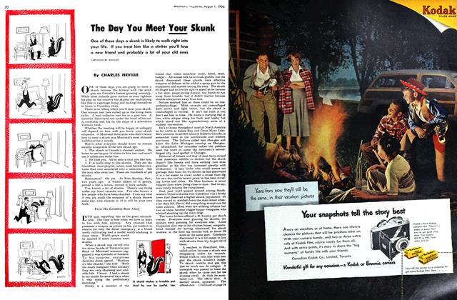 Article Preview: The Day You Meet Your Skunk, August 1950 | Maclean's