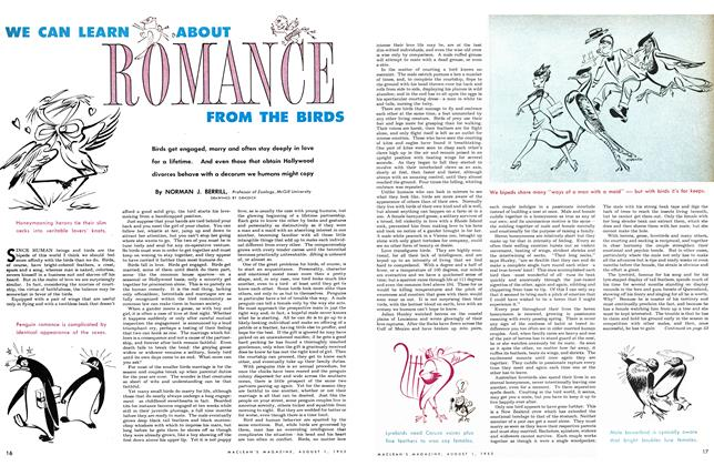 Article Preview: WE CAN LEARN ABOUT ROMANCE FROM THE BIRDS, August 1953 | Maclean's