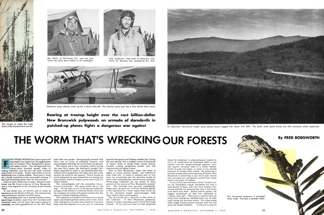 Article Preview: THE WORM THAT'S WRECKING OUR FOREST, September 1953 | Maclean's