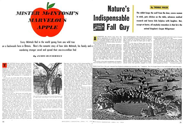 Article Preview: Nature's Indispensable Fall Guy, April 1954 | Maclean's