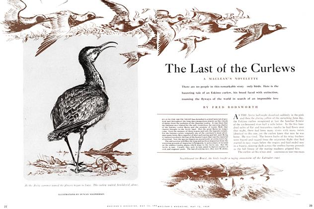 Article Preview: The Last of the Curlews, May 1954 | Maclean's