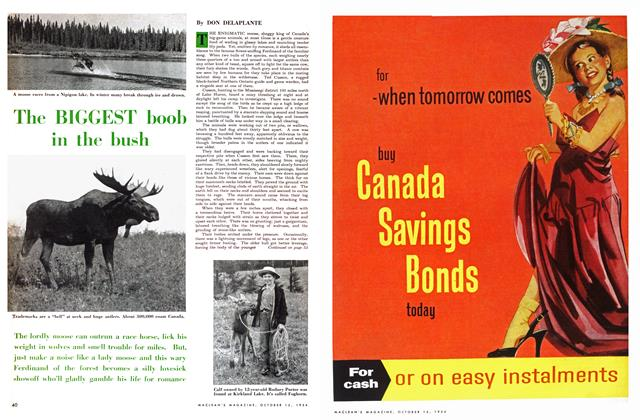 Article Preview: The BIGGEST boob in the bush, October 1954 | Maclean's