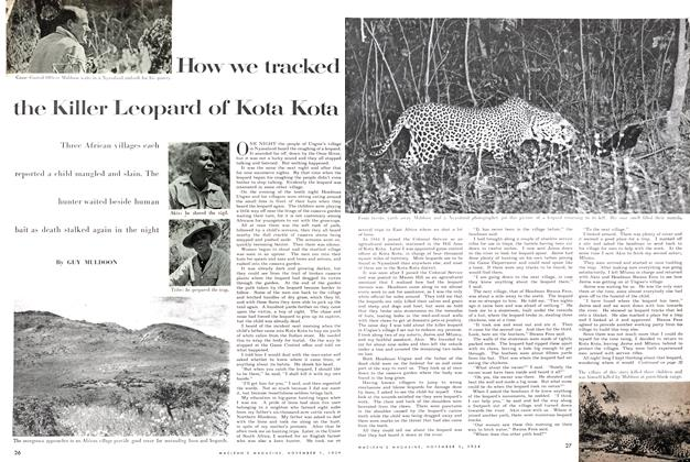 Article Preview: How we tracked the Killer Leopard of Kota Kota, November 1954 | Maclean's
