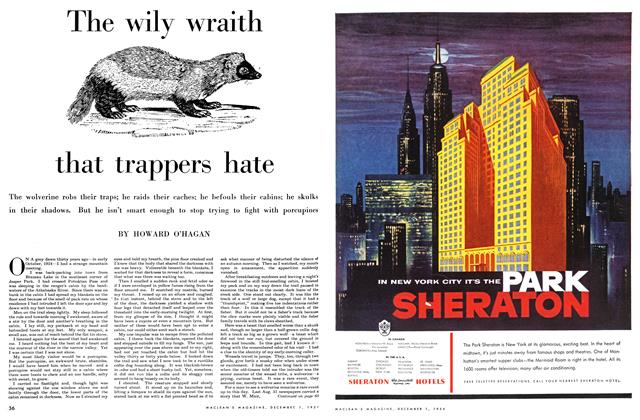 Article Preview: The wily wraith that trappers hate, December 1954 | Maclean's