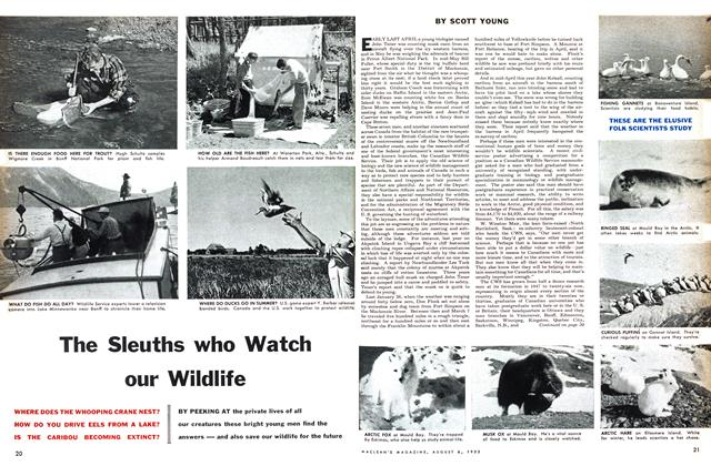 Article Preview: The Sleuths who Watch our Wildlife, August 1955 | Maclean's