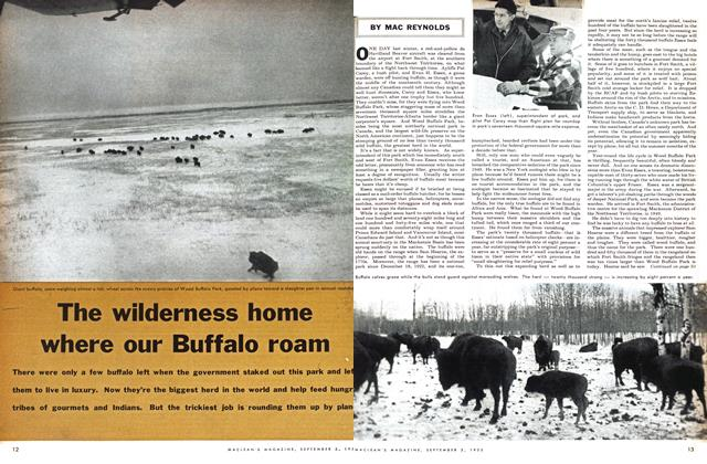 Article Preview: The wilderness home where our Buffalo roam, September 1955 | Maclean's
