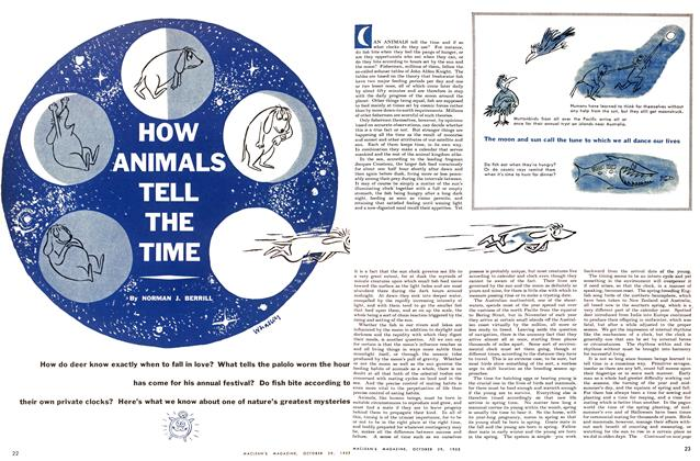Article Preview: HOW ANIMALS TELL THE TIME, October 1955 | Maclean's