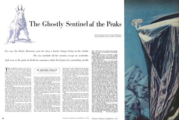 Article Preview: The Ghostly Sebtinel of the Peaks, November 1955 | Maclean's
