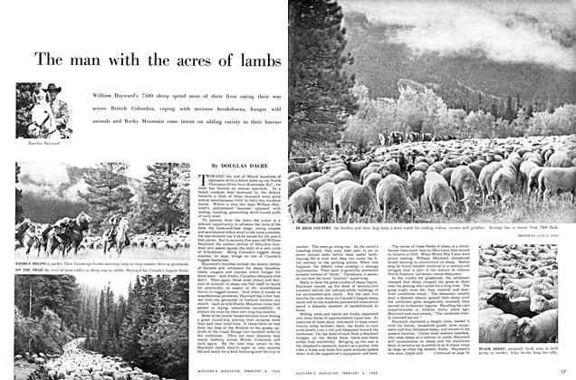 Article Preview: The man with the acres of lambs, February 1956 | Maclean's