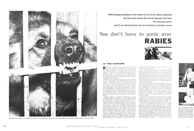 Article Preview: You don't have to panic over RABIES, June 1956 | Maclean's