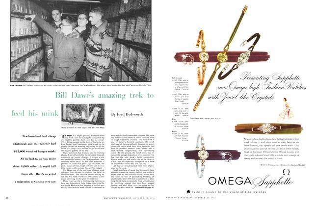 Article Preview: Bill Dawe's amazing trek to feed his mink, October 1956   Maclean's