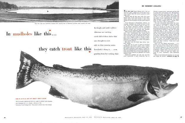 Article Preview: In mudholes like this... they catch trout like this, May 1957 | Maclean's