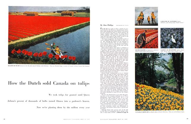 Article Preview: How the Dutch sold Canada on tulips, May 1958 | Maclean's