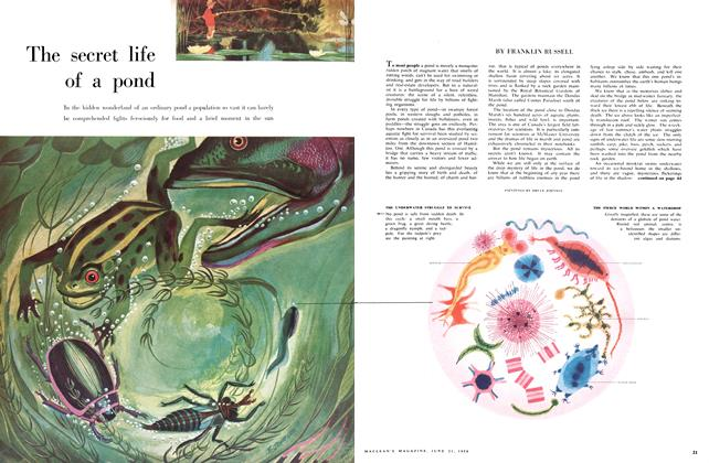 Article Preview: The secret life of a pond, June 1958 | Maclean's
