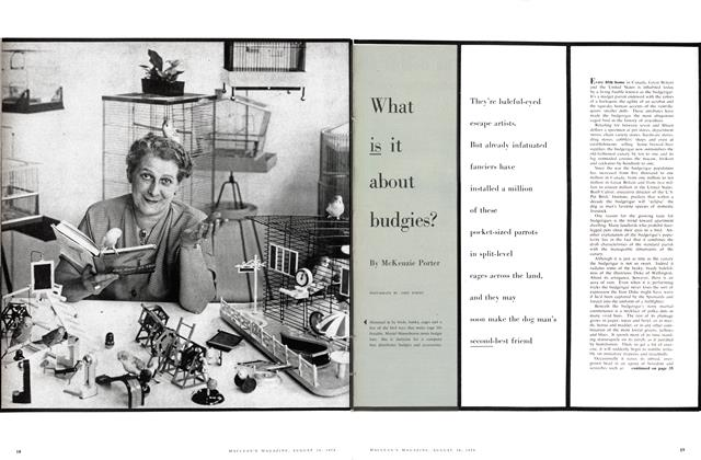 Article Preview: What is it about budgies?, August 1958 | Maclean's