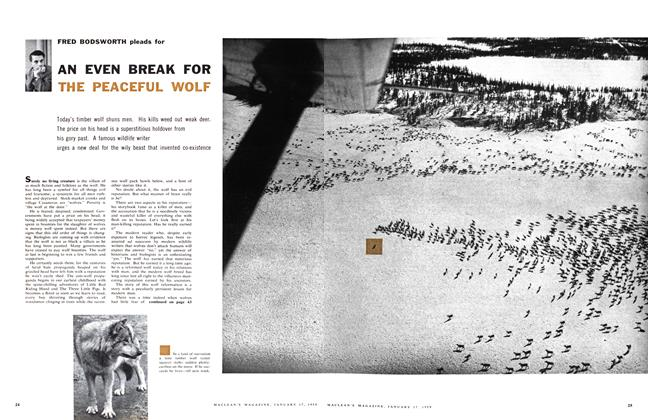 Article Preview: AN EVEN BREAK FOR THE PEACEFUL WOLF, January 1959 | Maclean's