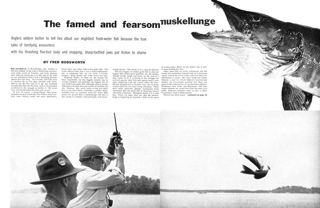 Article Preview: The famed and fearsome muskellunge, April 1959 | Maclean's