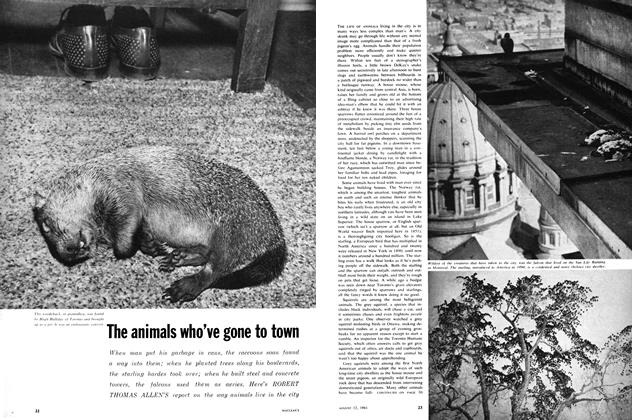 Article Preview: The animals who've gone to town, August 1961 | Maclean's