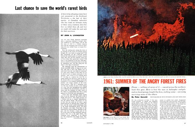 Article Preview: 1961: SUMMER OF THE ANGRY FOREST FIRES, September 1961 | Maclean's