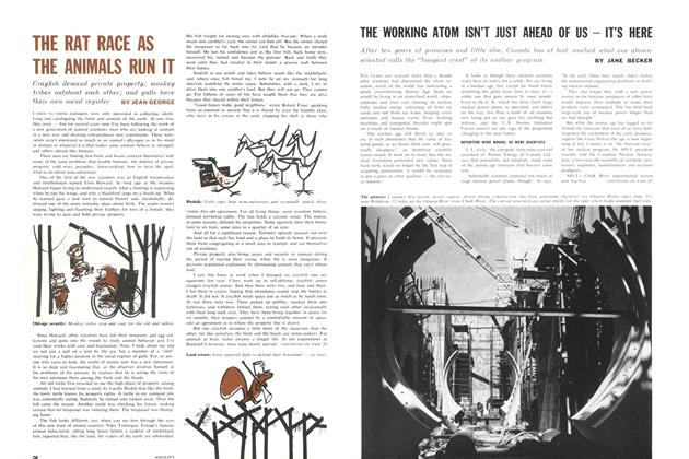 Article Preview: THE RAT RACE AS THE ANIMALS RUN IT, September 1962 | Maclean's
