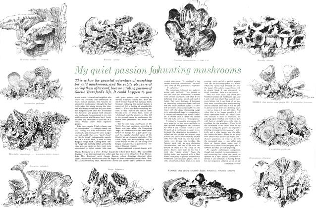 Article Preview: My quiet passion for hunting mushrooms, May 1963 | Maclean's