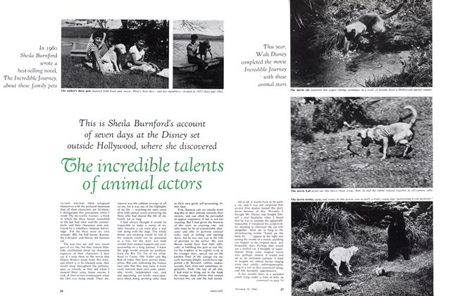 Article Preview: The incredible talents of animal actors, October 1963 | Maclean's