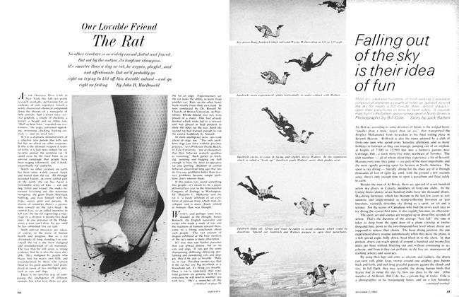 Article Preview: The Rat, December 1964 | Maclean's