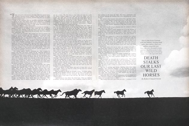 Article Preview: DEATH STALKS OUR LAST WILD HORSES, January 1965 | Maclean's
