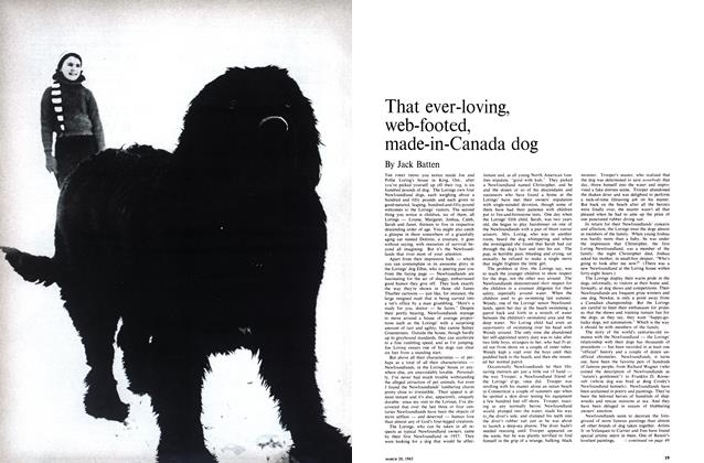 Article Preview: That ever-loving, web-footed, made-in-Canada dog, March 1965 | Maclean's