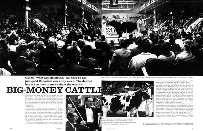 Article Preview: BIG-MONEY CATTLE, February 1967 | Maclean's