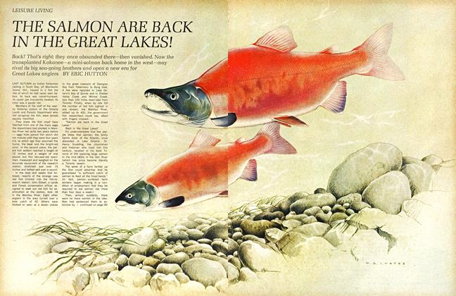 Article Preview: THE SALMON ARE BACK IN THE GREAT LAKES!, October 1967 | Maclean's