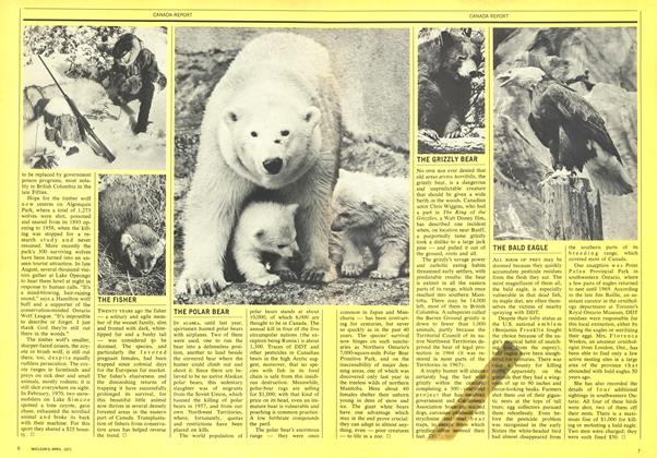 Article Preview: THE BALD EAGLE, April 1971 | Maclean's