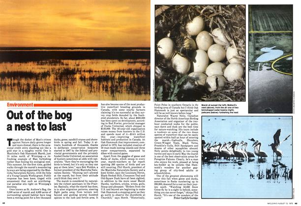 Article Preview: Out of the bog a nest to last, August 1979 | Maclean's