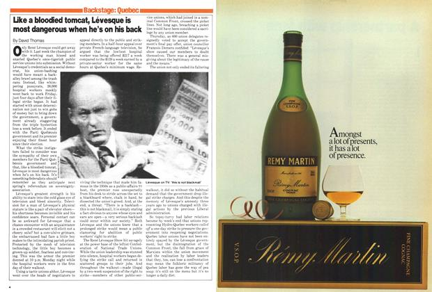 Article Preview: Like a bloodied tomcat, Lévesque is most dangerous when he's on his back, December 1979 | Maclean's