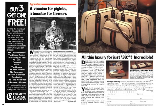 Article Preview: A vaccine for piglets, a booster for farmers, April 1980 | Maclean's