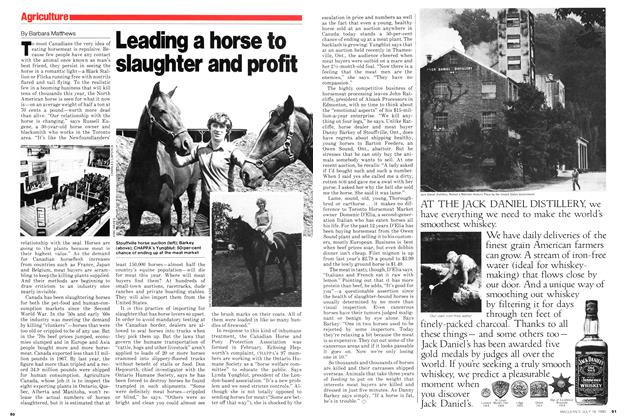 Article Preview: Leading a horse to slaughter and profit, July 1980 | Maclean's