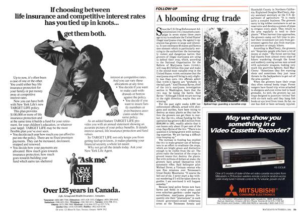 Article Preview: A blooming drug trade, October 1984 | Maclean's
