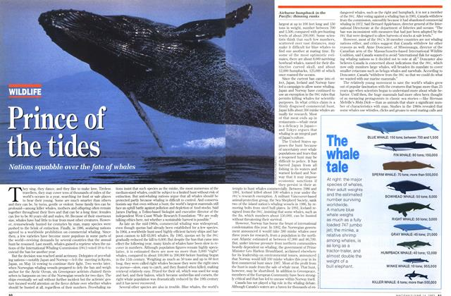 Article Preview: Prince of the tides, June 1993 | Maclean's