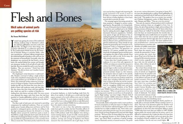 Article Preview: Flesh and Bones, January 2001 | Maclean's