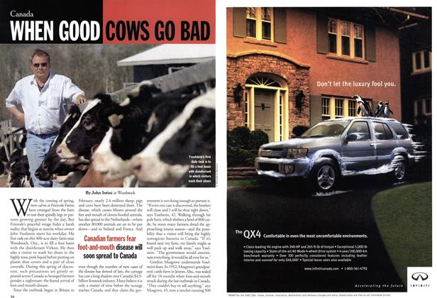 Article Preview: WHEN GOOD COWS GO BAD, May 2001 | Maclean's