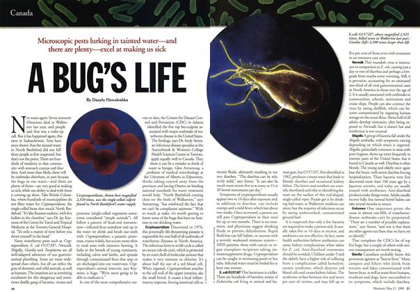 Article Preview: A BUG'S LIFE, May 2001 | Maclean's