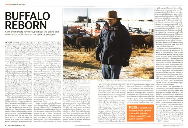 Article Preview: BUFFALO REBORN, February 2004 | Maclean's