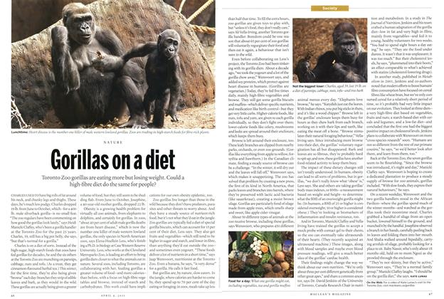 Article Preview: Gorillas on a diet, April 2011 | Maclean's