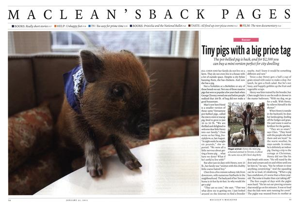Article Preview: Tiny pigs with a big price tag, January 2012 | Maclean's